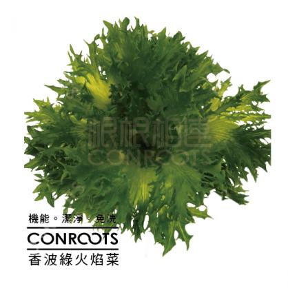 香波綠火焰菜