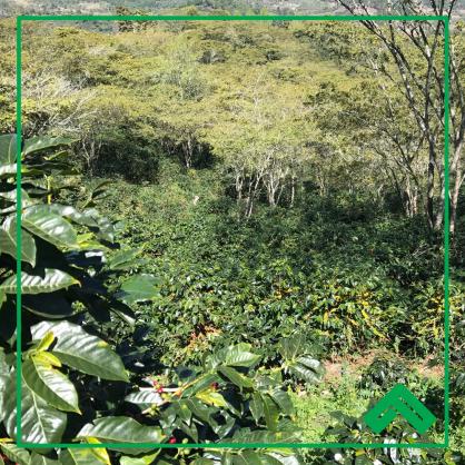 Honduras Finca Medrano Natural