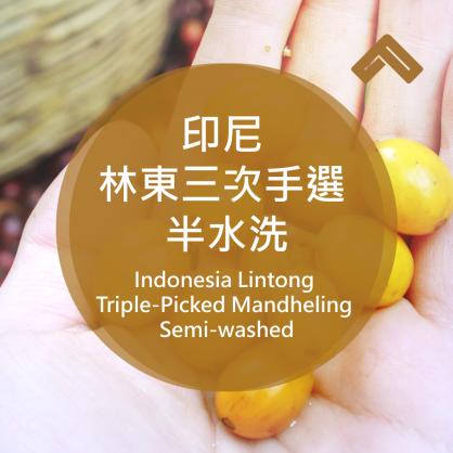 印尼 林東三次手選 半水洗