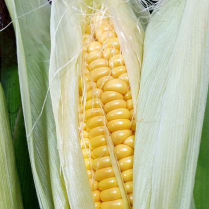 【甜】玉米 3斤 / 5斤
