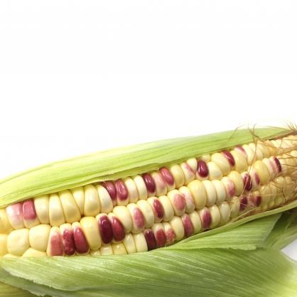 【纖沺大山元農場】糯玉米3斤/5斤